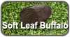 Soft Leaf Buffalo Turf